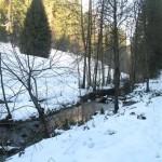 En forêt noire près de Baiersbronn (Small)