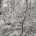 Guirlandes de neige (Small)