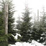 Kniebies montagne laissée en l'état après Tempête de 1999 Belle végétation (Small)