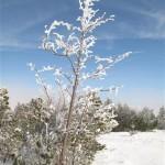 arbre enneigé (Small)
