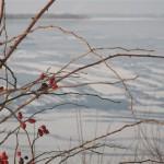 lac gelé de Senftenberg (2) (Small)