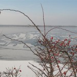 lac gelé de Senftenberg3 (Small)