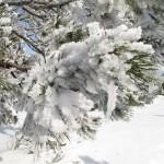 le poids de la neige (Small)