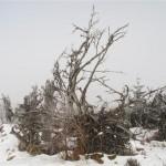 racines d'arbres morts (Small)