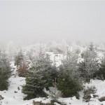 reprise naturelle de la végétation après tempête de 1999 (Small)