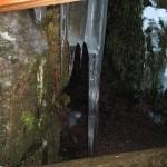 stalactites (Small)