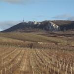 vigne en tchequie (Small)