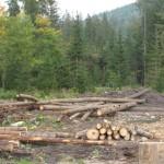 PHOTOS SLOVAQUIE exploitation forestiere