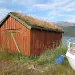 en montant vers la norvége couverture végétale