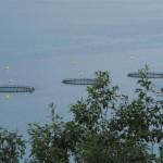 en montant vers la norvége ferme marine