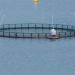 en montant vers la norvége parc de ferme marine