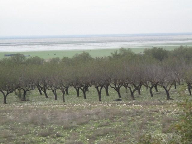 59- olivier grece 180 [640x480]